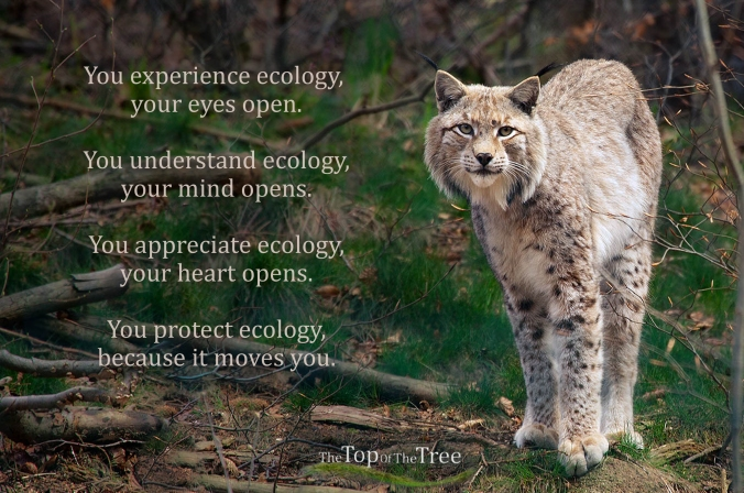 You experience ecology, your eyes open. You understand ecology, your mind opens. You appreciate ecology, your heart opens. You protect ecology, because it moves you.