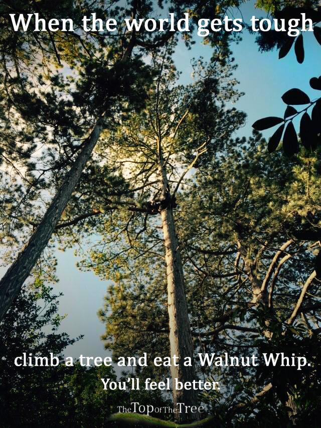 walnutwhip